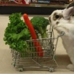 Bunny w Grocery Cart