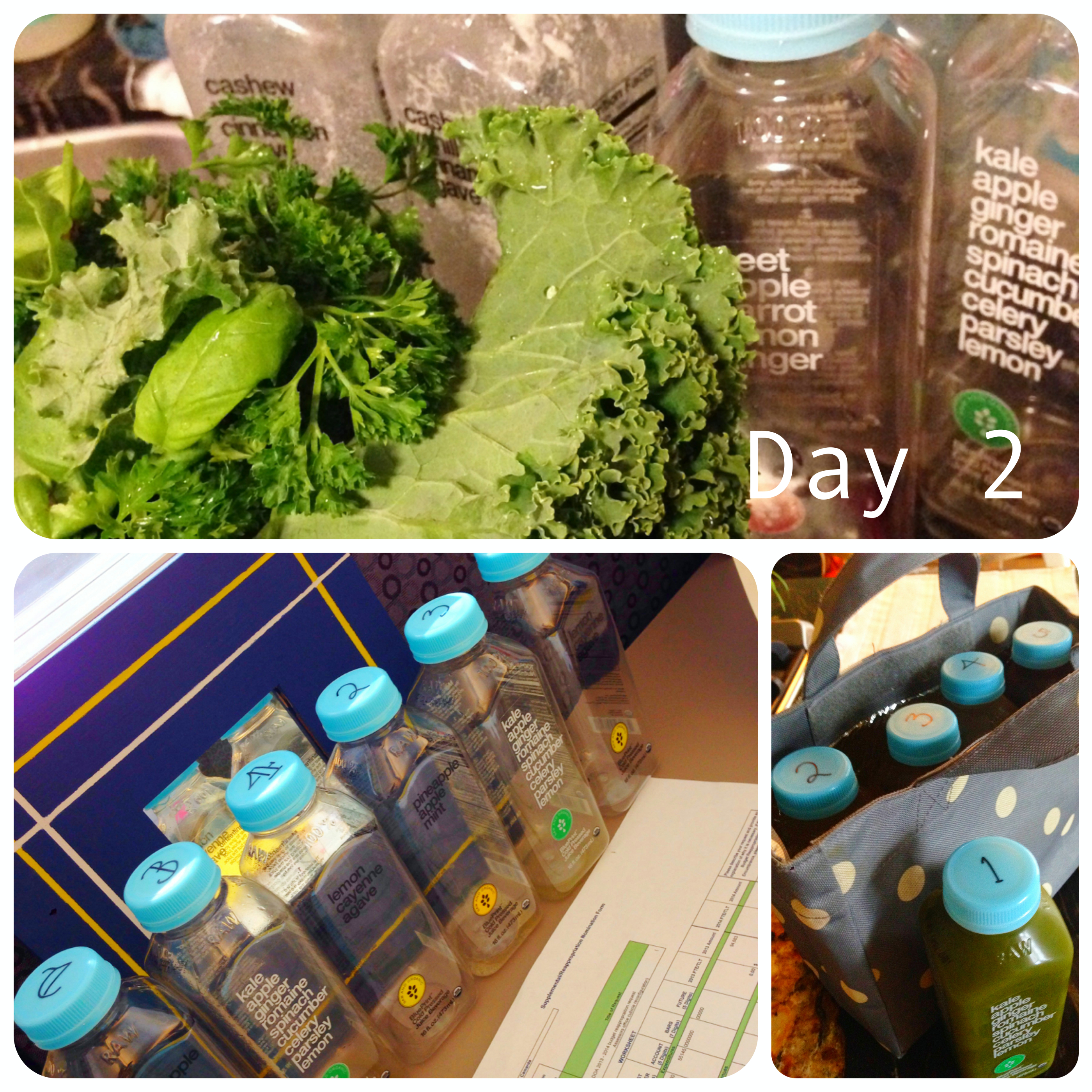Juice fast blueprint for different food habits and unhappy day 2 when the house rabbit got more fresh greens and solid food than anyone malvernweather Images