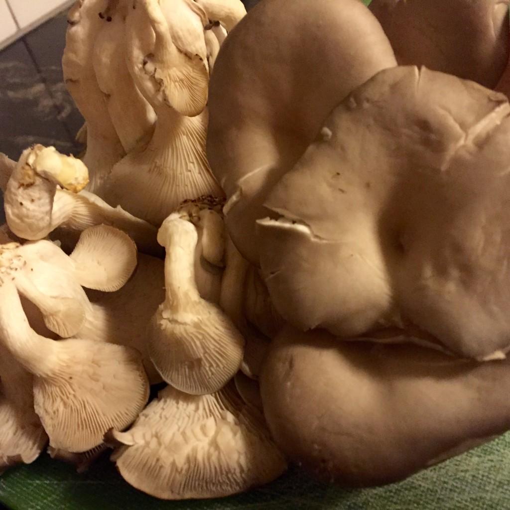 Fresh oyster mushrooms from the Ballard Farmer's Market, up close.