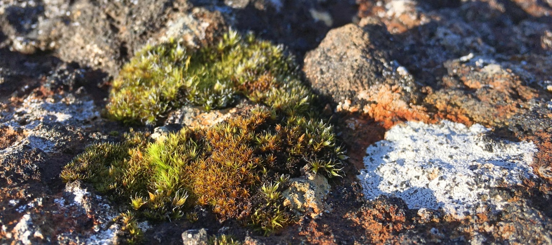 Mosi, and what I thought was bird poop but turned out to be some other kind of moss or lichen near Glymur Falls, Iceland