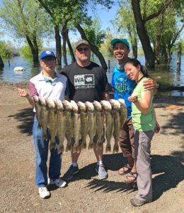 Our catch of walleye and one perch from Potholes Reservoir with Rose Outdoor Adventures' guide Ross Shelby